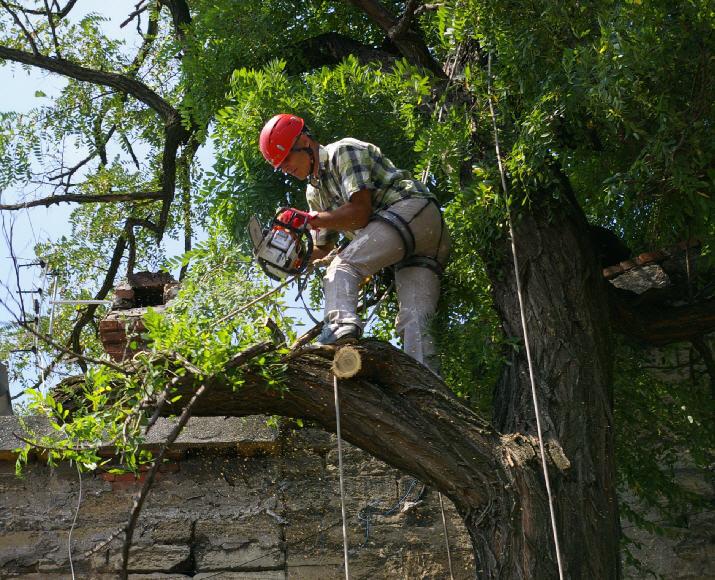 Профессиональное удаление деревьев по всем правилам