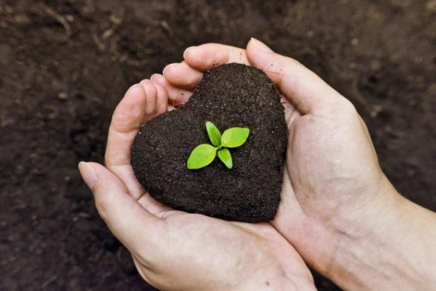 Основные методы защиты растений, увеличение плодородия почв
